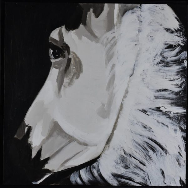 A white horse in shadows twists to look behind as seen from the rider's view. Neutral tints of white and cream with a black background. Western. Large Painting by artist Donald Ryker in textured expressionist impressionist art style with unique impasto glaze technique.